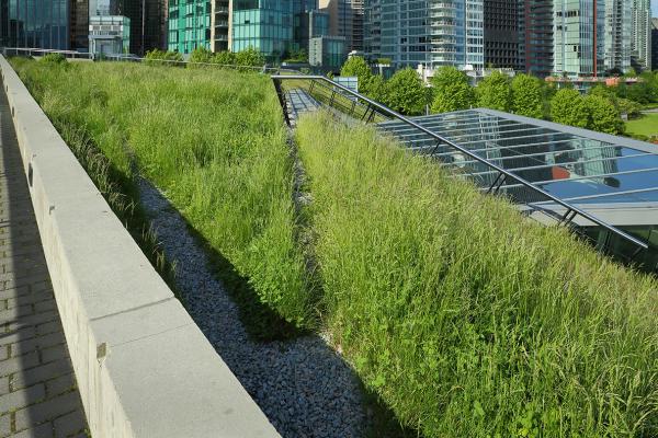 Le toits verts peuvent-ils aider à faire face aux changements climatiques