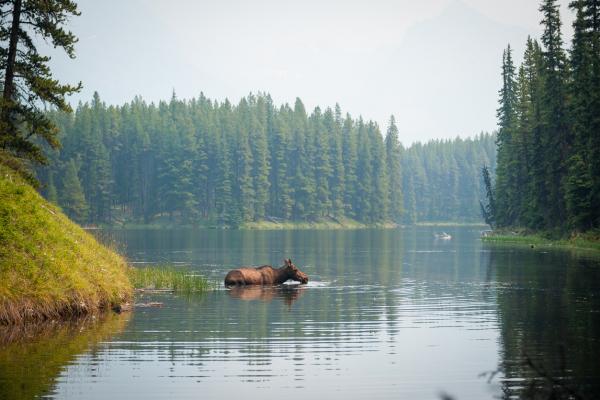 Solutions basées sur la nature: Possibilité de politiques publiques pour le climat et la biodiversité