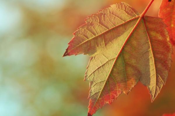 Obligations et changement climatique : l'état du marché en 2016 au Canada