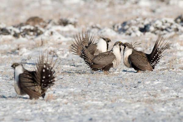 Instruments économiques pour la protection des espèces en péril sur des terres privées