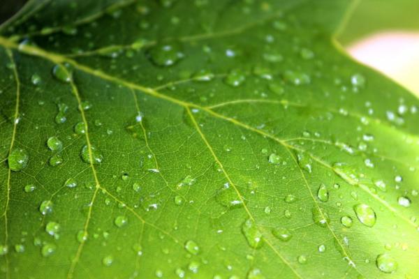Priorités 2011 des entreprises canadiennes en matière de développement durable